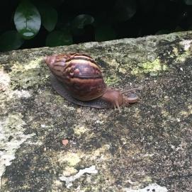 Des escargots de taille!